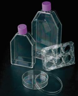 Flacon de culture cellulaire, traité TC, avec bouchon ventilé