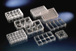 Multidishes, Nunc™ cell culture treated surface, PS, sterile